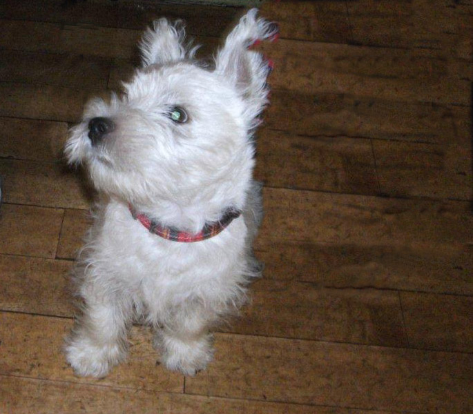 Dogs In Scotland Free To Good Home