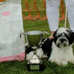 Bridge of Weir Dog Show Winners!